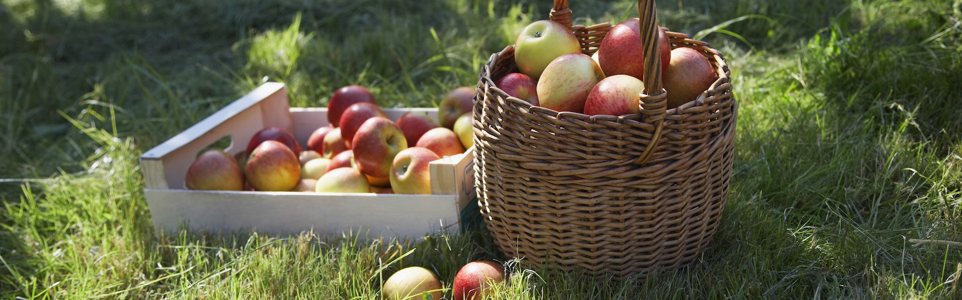 Снимка на кошница с ябълки