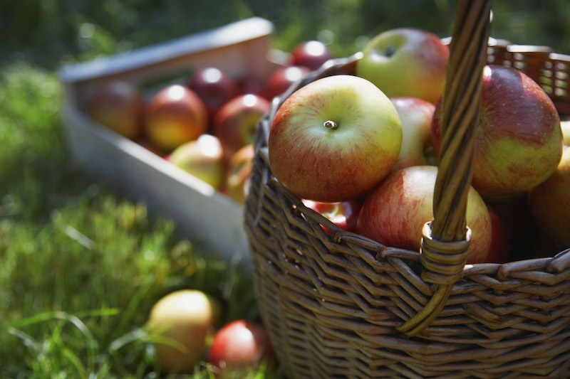 Photo of apples in a basket